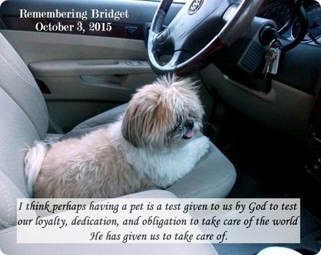 Remembering Bridget